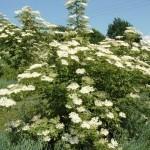 Zdravilne rastline -BEZEG