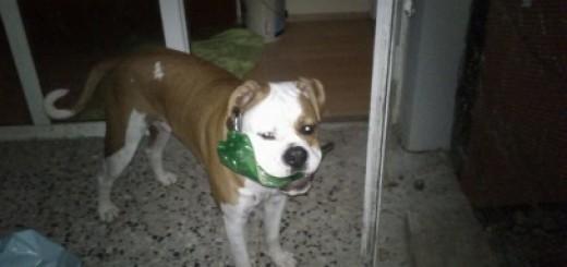 Kimbo - moj prvi hišni ljubljenček