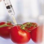 Gensko spremenjena hrana – ali je res tako nedolžna?