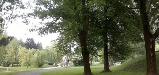 Ne samo ljudje, tudi drevesa so v stresu. Predvsem tista v mestih. Ali lahko drevesa pred stresom obvarujemo z odgovornejšim ravnanjem do narave?