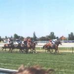 Konjske dirke v Melbournu in začetek pravega popotovanja