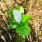 Venerina ogrlica (2)