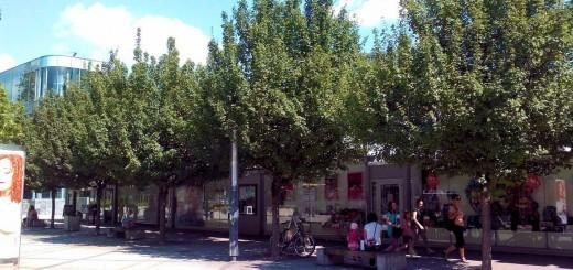 Slika 2: Pod drevesnimi krošnjami iščejo ljudje senco v vročih poletnih dneh (Velenje, Cankarjeva ulica)