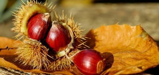 darovi-jeseni-pravi-domaci-kostan-1