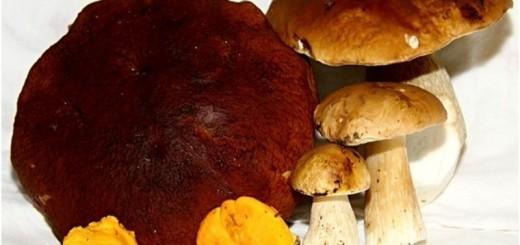 Gobe: popestritev jesenske kulinarike