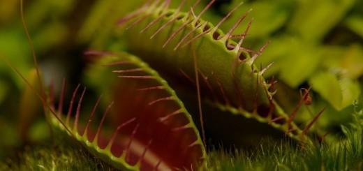 Mesojede rastline (Carnivorous plants)