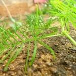 Biokmetijstvo kot možnost preživetja