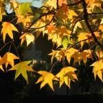 Slovenska imena mesecev – listopad – november