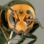 Naravna pomoč pri pikih žuželk
