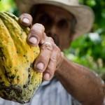 Kakavovo maslo (Oleum cacao)