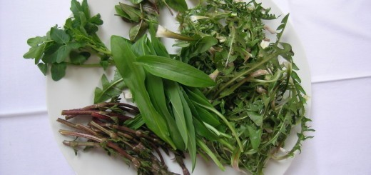 Pomladno čiščenje telesa z divjo hrano