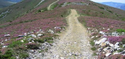 Camino Primitivo - Prvotna Jakobova pot