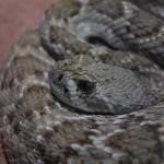 Ugriz kače – preventiva in ukrepanje